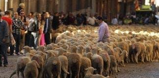 Shepherd e