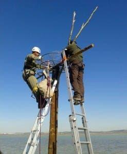 ospreys-cadiz