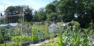 allotment e