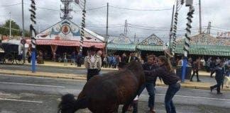 horse PACMA e