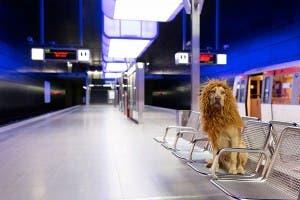 stray dog model 4