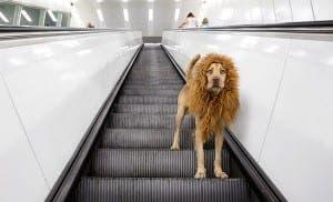 stray dog model