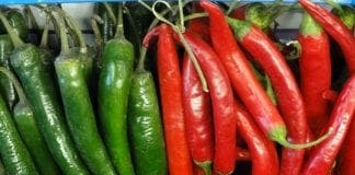 Chillies red and green e