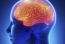 brain e