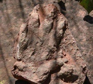 dinosaur footprint 2