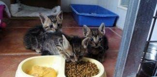 kittens e