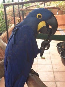 parrots night out (1)