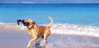 dog beach e