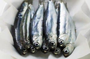 Several fresh anchovies on paper