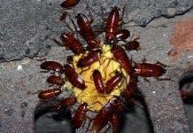 cockroach e
