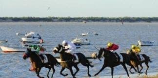 horse race e