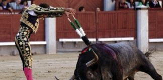 bullfight madrid e