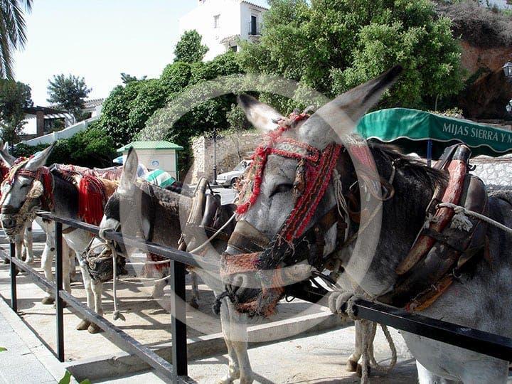 olive press spain burro