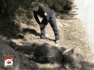 shot bear