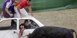 x bullfights