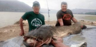 catfish monster