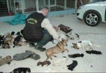 dead dogs e