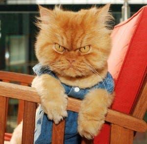 Garfi, the world's angriest cat