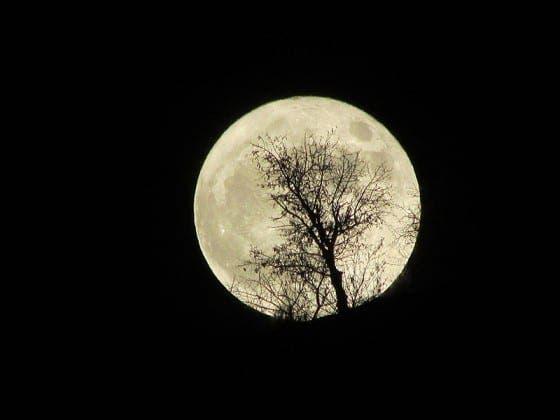 supermoon  tree kev bastin