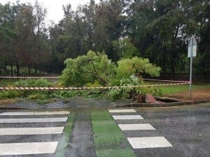A tree felled by a mini tornado on Arroyo de Miel in Benalmadena