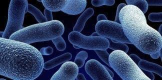 bacteria e