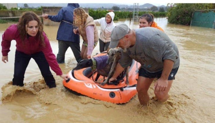 dog sanctuary flood  alhaurin de la torre