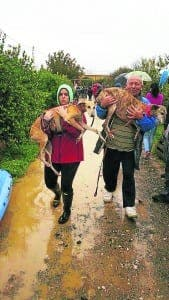 dog-sanctuary-flood-2-galgos-en-familia