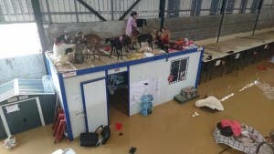 Dogs stranded on roof of Galgos en Familia dog shelter in Cartama