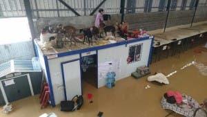 Dogs stranded on roof of Galgos en Familia dog shelter in Cartama