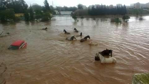 horse san pedro camino a ronda flood