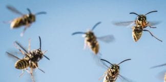 wasps giles e