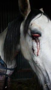 SICKENING: Rocco's eye after attack