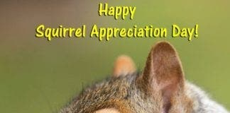 GOING NUTS The greetings card industry is squirreling it away thanks to national days e