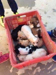 Crate of puppies