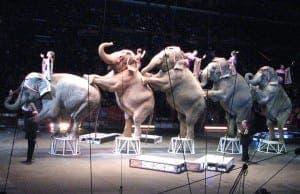 elephantsringlingbrotherscircus2008