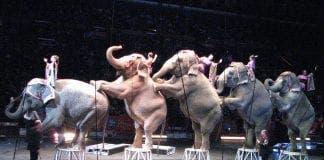 ElephantsRinglingBrothersCircus e