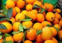 cold oranges