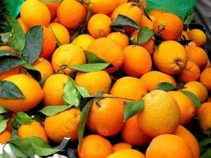 cold-oranges