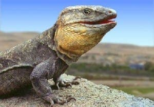 El Hierro giant lizard
