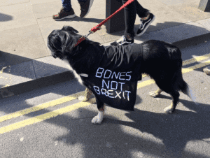 brexit-banner-4