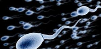 sperm e