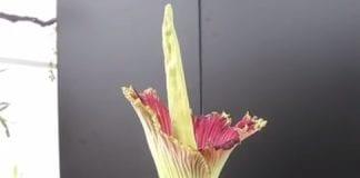 tallest flower