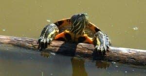 A turtle in a Malaga park