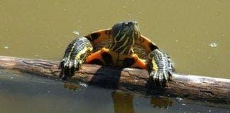 turtle malaga