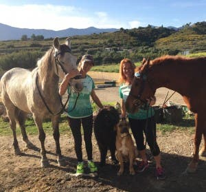 horse-marathon