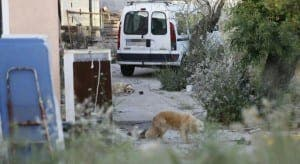 HORROR: Dogs devour dead owners
