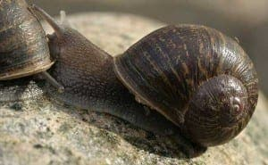 SNAIL'S PACE: Jeremy in love triangle