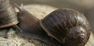 jeremy the snail