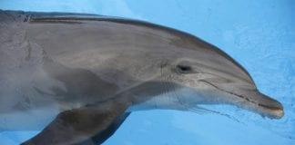 dolphin e