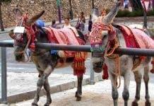 mijas donkeys e